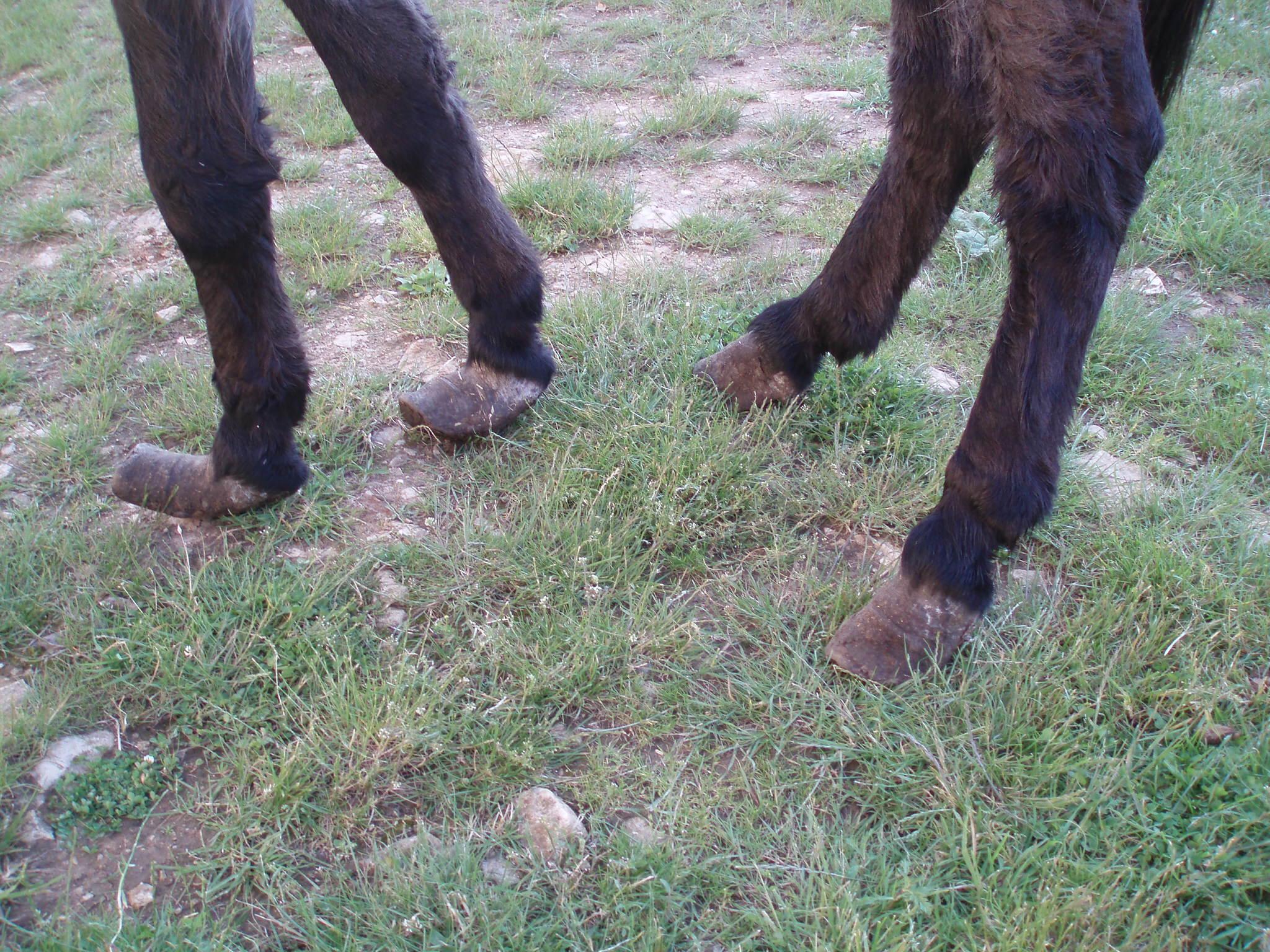 Titan's feet