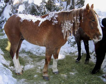 450_horse_rescue_081224
