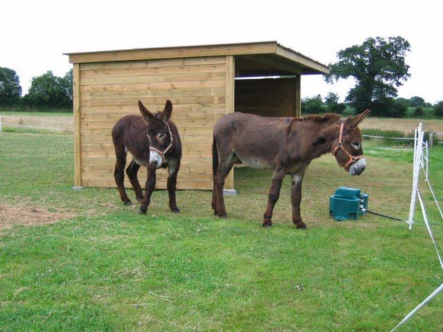 Piona (L) and Wilbur(R)
