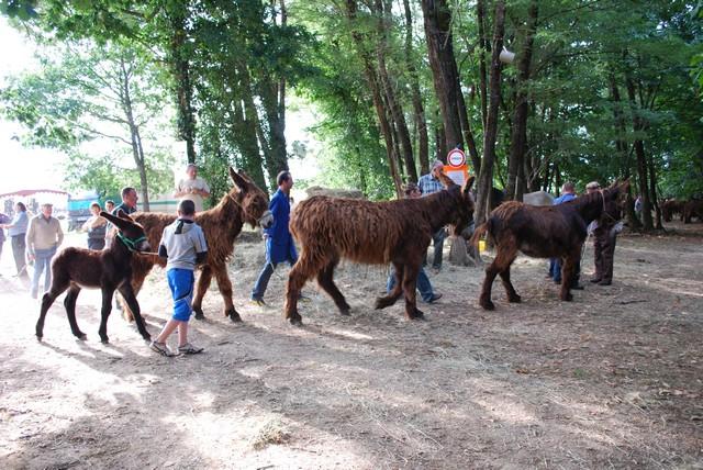 Poitou donkeys at our local Romange horse fair